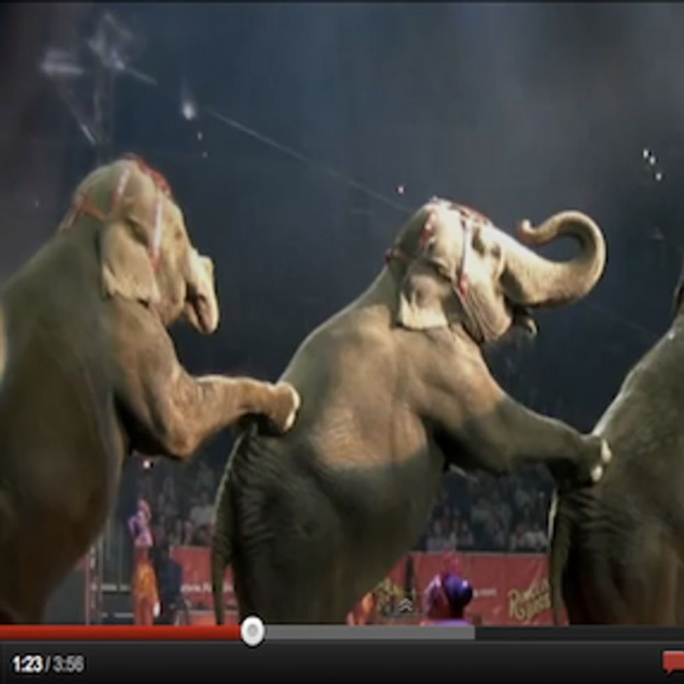 Alec Baldwin Is Right About Circuses. Don't Go To Them.