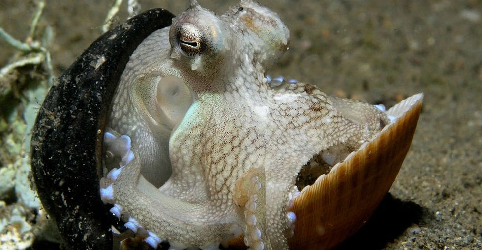 Octopus intelligence: Here are 13 of the most frighteningly smart things they can do.