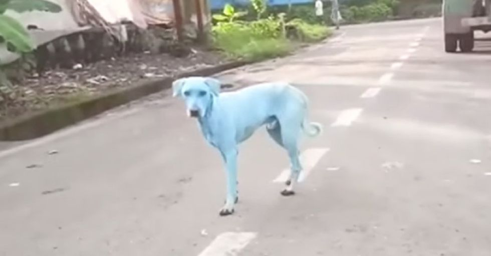 Bright blue dogs might be pollution's weirdest effect ever.