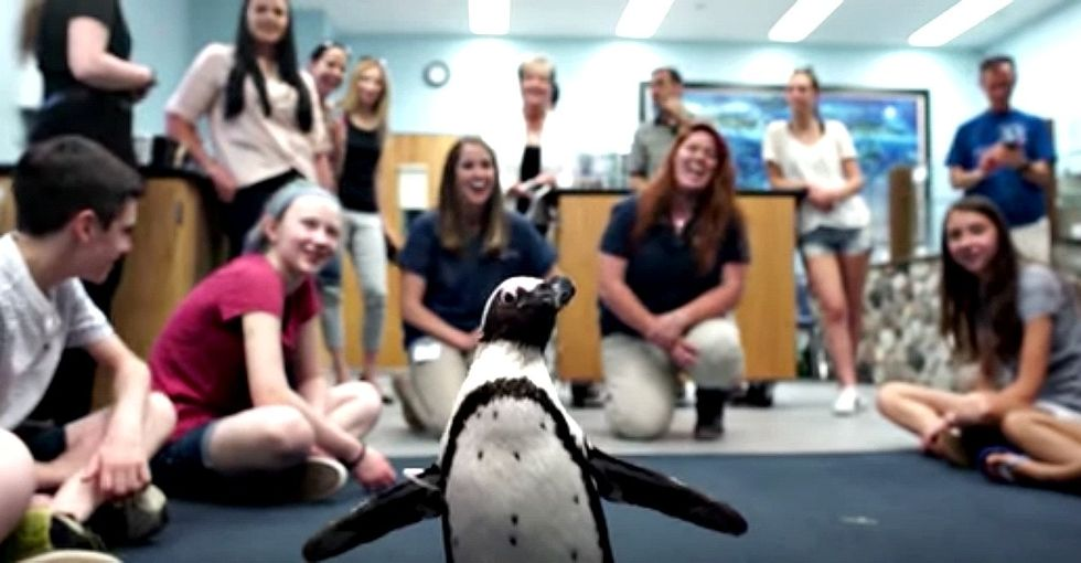 How middle schoolers and a 3D printer built this penguin a walking shoe.