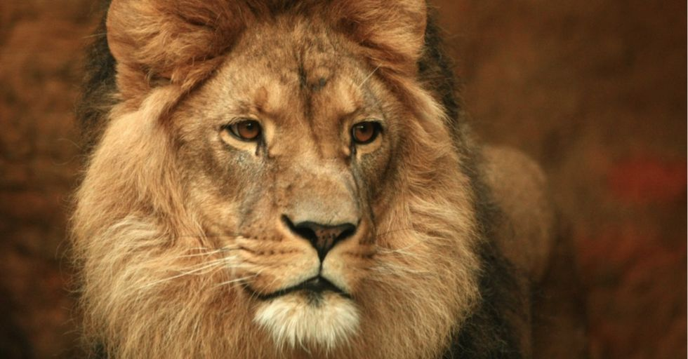 What most people have missed about the poaching of Cecil the lion: There's someone else to blame.