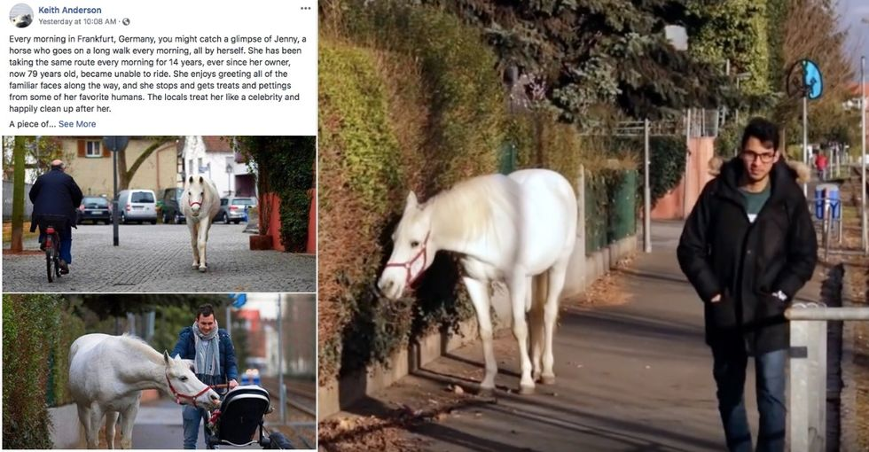 Meet Jenny, a horse that has been enjoying daily walks through town for 14 years—all by herself.