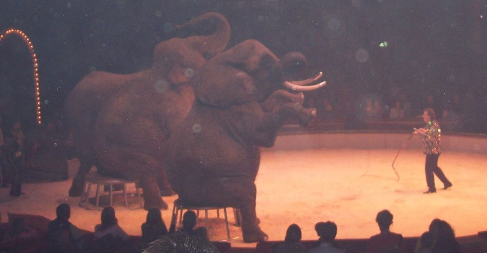 A Good Reason Not To Go To The Circus With Your Kids