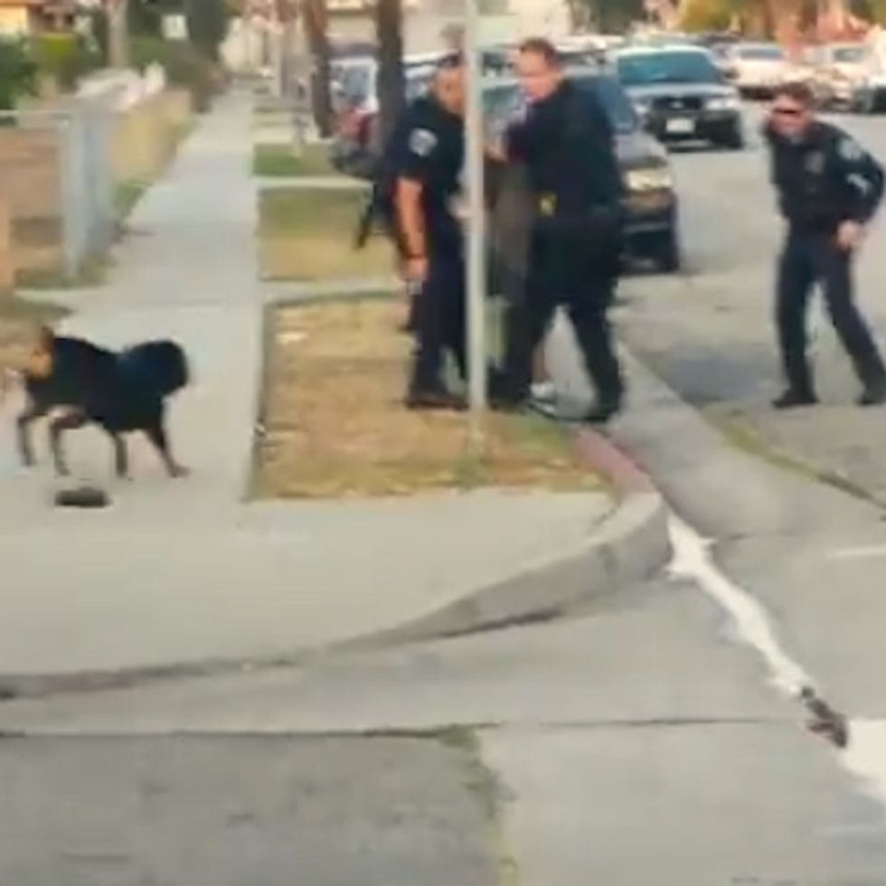 Dog Tries To Save Owner After Cops Handcuff Him. What Ensues Is Heartbreaking. (GRAPHIC CONTENT)