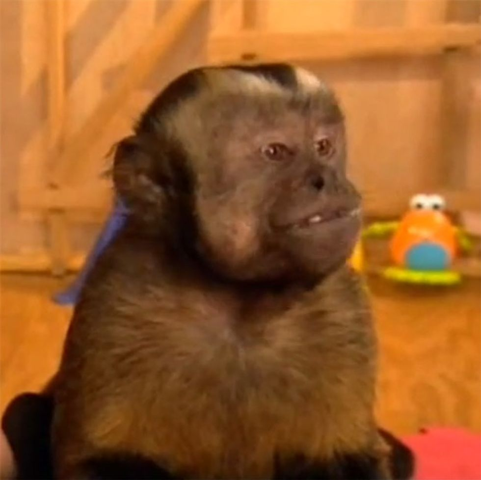 If these monkeys can figure out what 'fair' means, why can't humans?