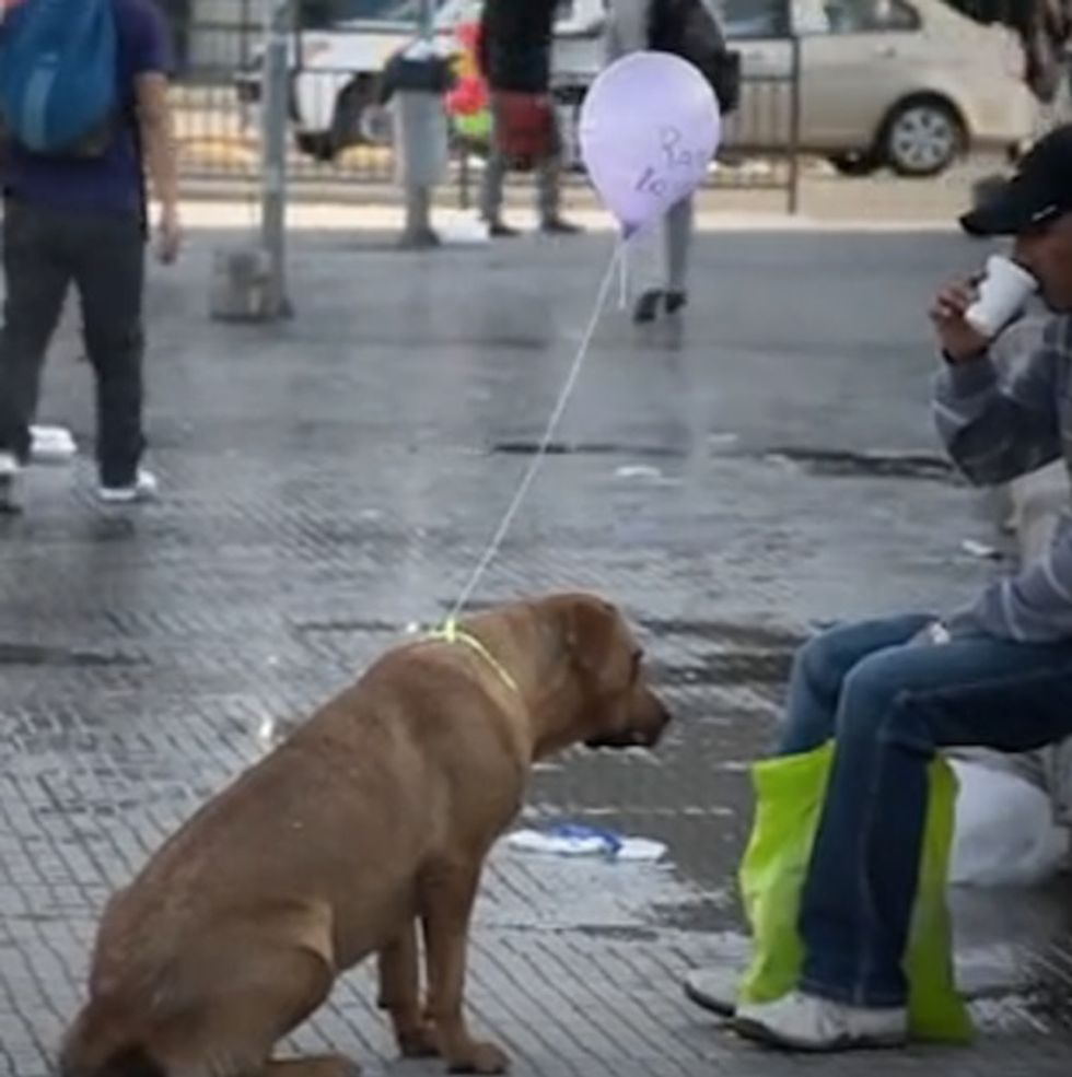 What These Kids Did To Those Dogs ... Eh, Just Watch. You'll Love It.