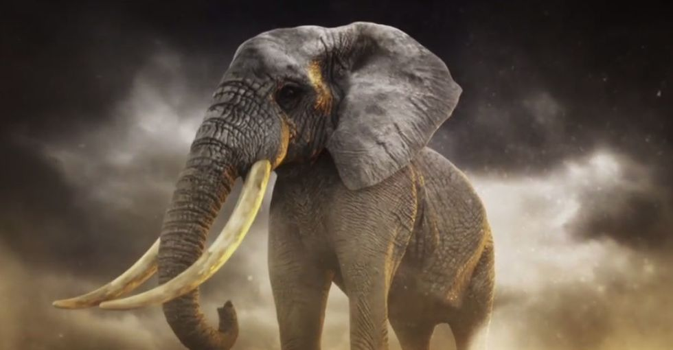 The endangered elephants of Africa have an unlikely hero: Billy Joel.