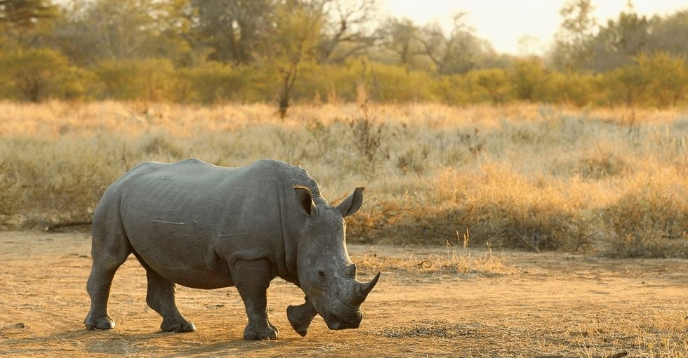 How do you take down a $20 billion black market and save the rhinos with a 3D printer? Like this.