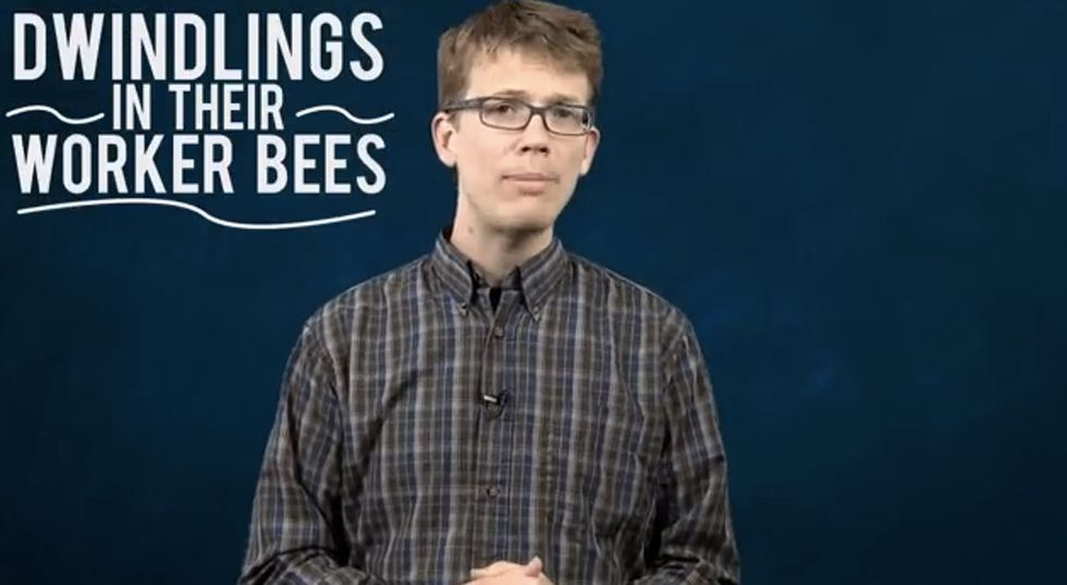 What's Going On With Honeybees Is Kinda Weird. Like, Horror Movie Weird.