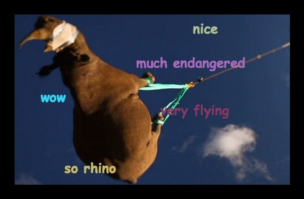 Wow. Watch These Rhinos Fly! Much Endangered.