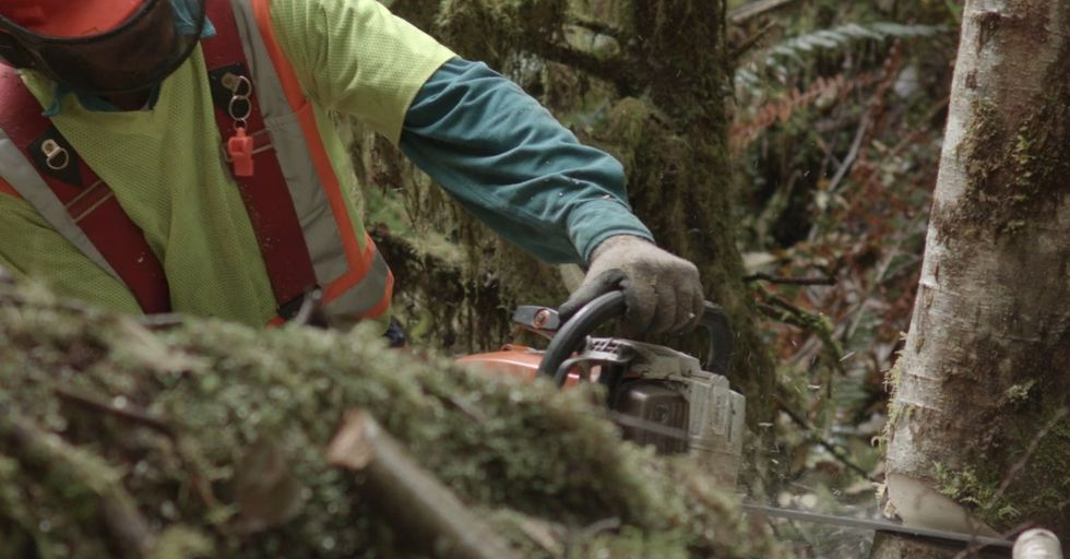 He Used To Live Off The Land. So What Made Him Pick Up A Chain Saw And Go At It?