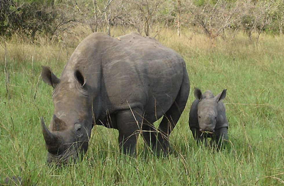 A baby rhino named Gertjie was rescued after poachers killed his mother. Now, he's thriving.