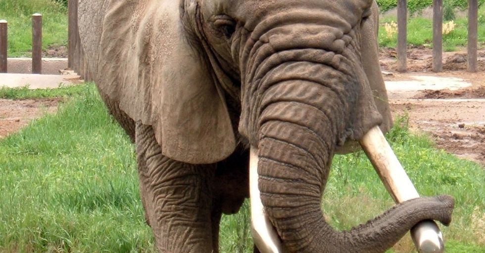 Who Wants To Learn Some Eye-Opening And Disturbing Things About Elephants?