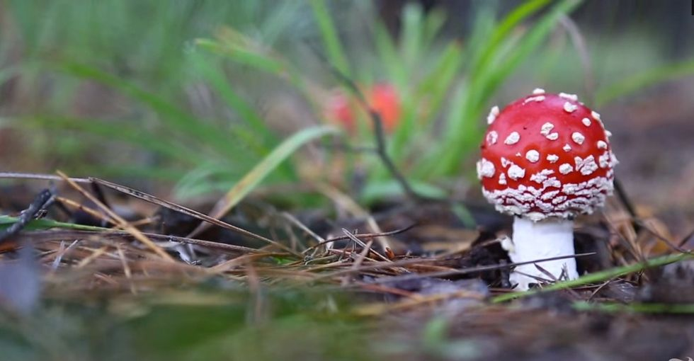 Something Happened 28 Years Ago, And It's Making Spiderwebs, Birds, And 'Shrooms Go BERSERK