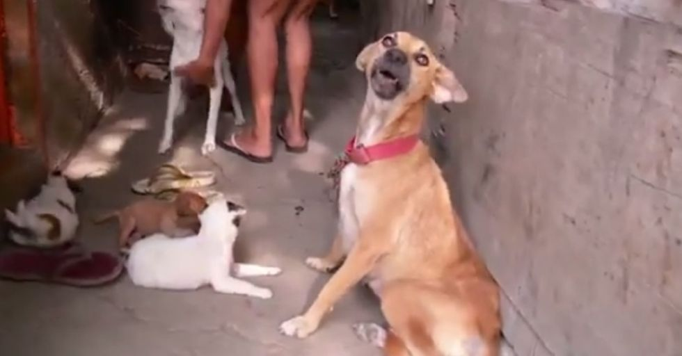 These dogs can't really help what they're doing to people, but the right people can.