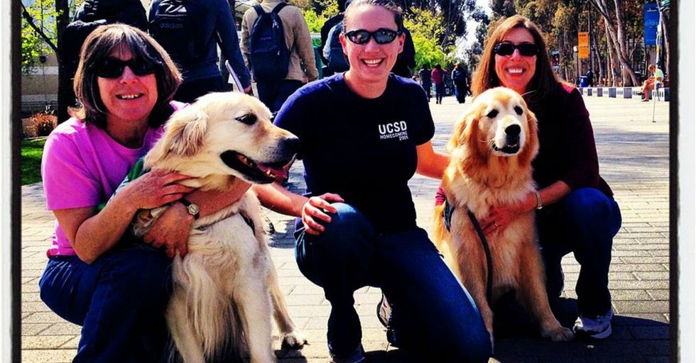 The sweet, furry approach some colleges are taking to ease students' stress is brilliant.