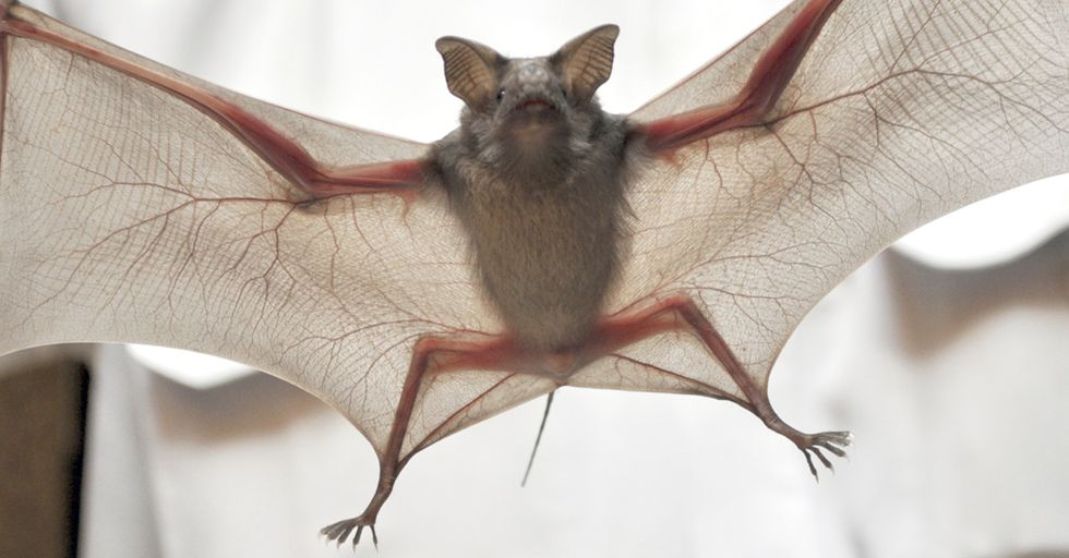 This Terrifying Little Creature Is Actually Much Deadlier Than You Probably Thought
