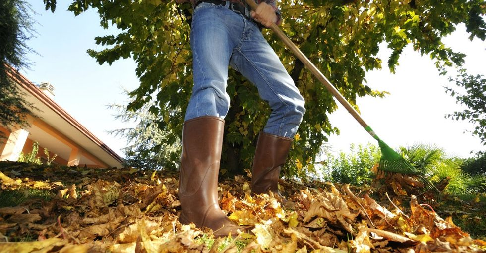3 reasons why you should stop raking leaves this fall and never look back.