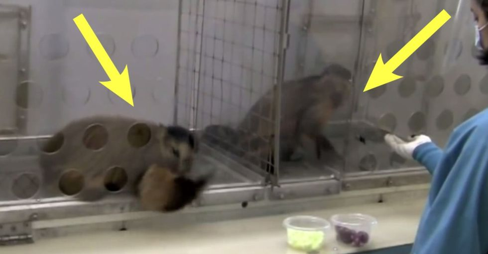 2 monkeys were paid unequally; see what happens next — and hear the rest of the story.