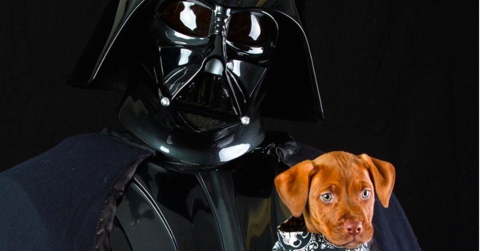 These 7 rescue pets are taking the Internet by storm thanks to a special photo shoot.