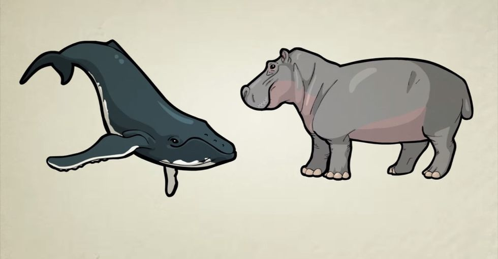 This Should Be Required Viewing For Deniers Of Evolution