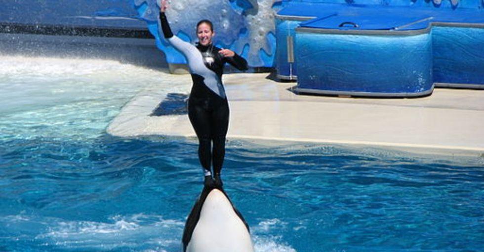 AMAZING: Eighth-Grader Convinces Entire School To Skip SeaWorld