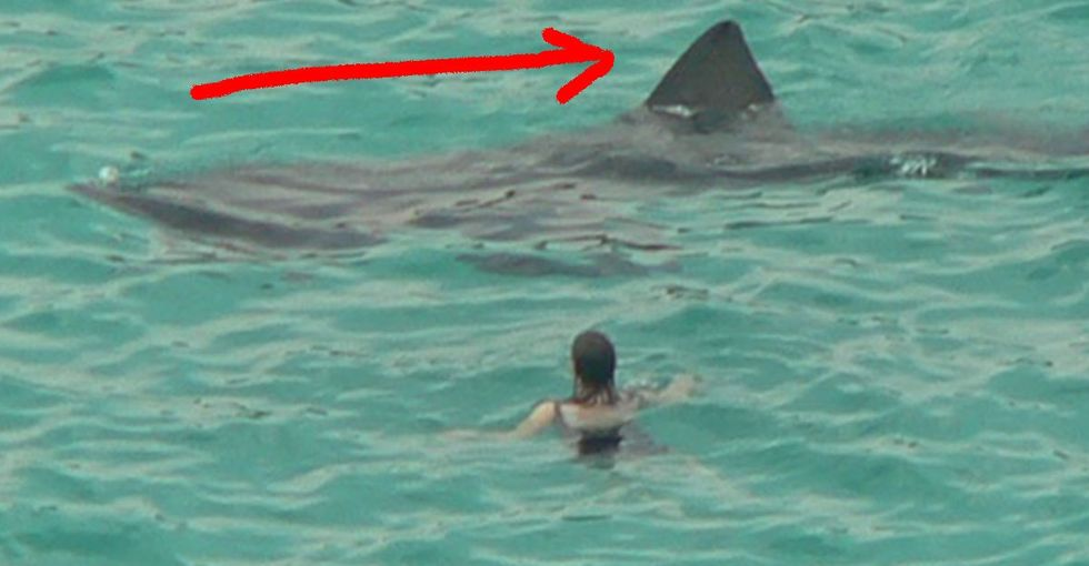 A Truth About Sharks That Will Take A While To Fully Comprehend. But When You Do, Man, It's Killer.