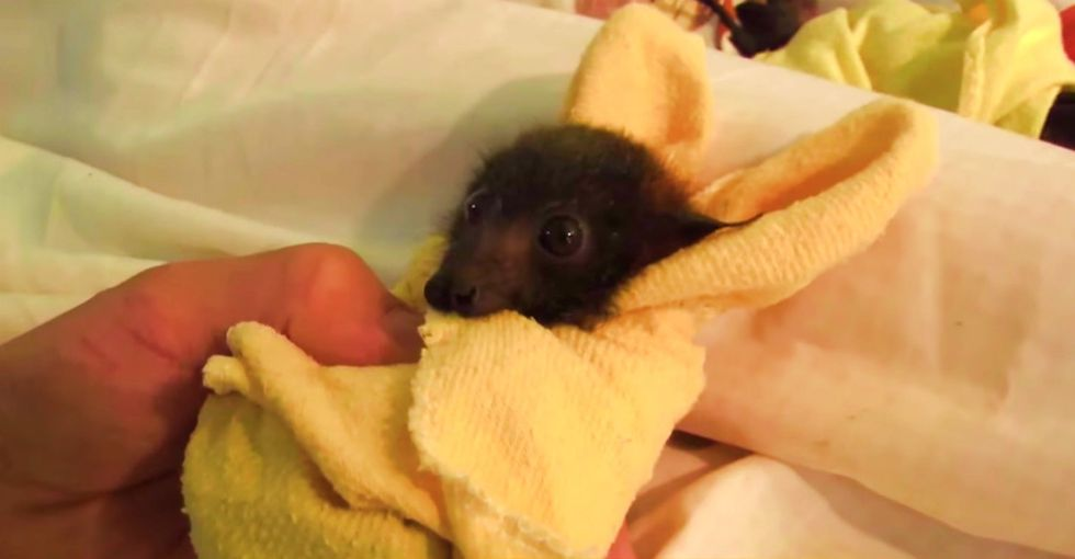 Some Folks Are Scared Of This Little Orphan Pup, But All He Wants Is A Little Pampering