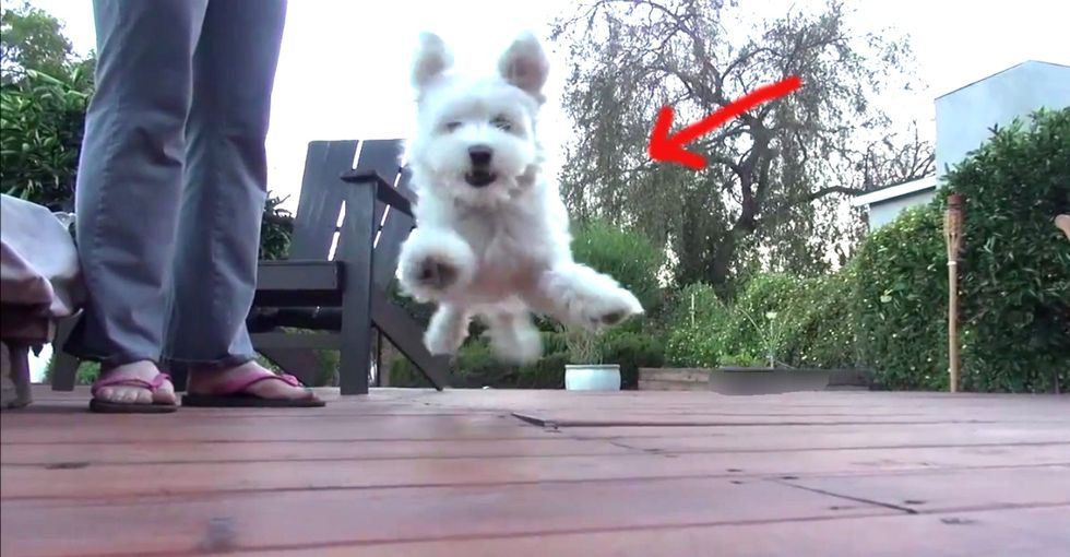 A Puppy That Tries To Scare People Away Gets Exactly What He Has Coming To Him