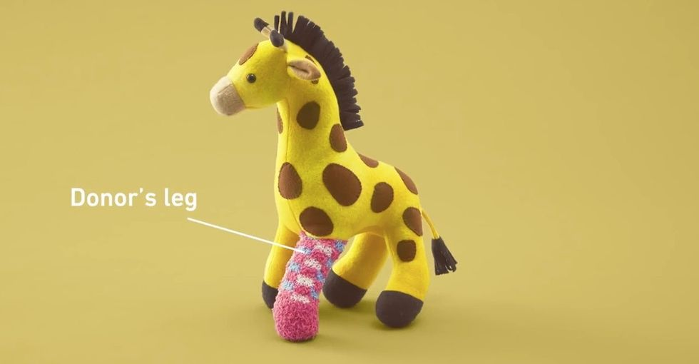 How stuffed animals are making organ donation a little more accessible.