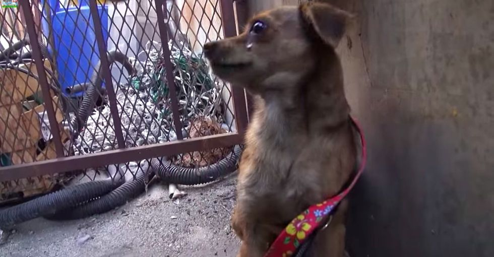 Seeing what a scared puppy forced herself to do pretty much melted my heart.