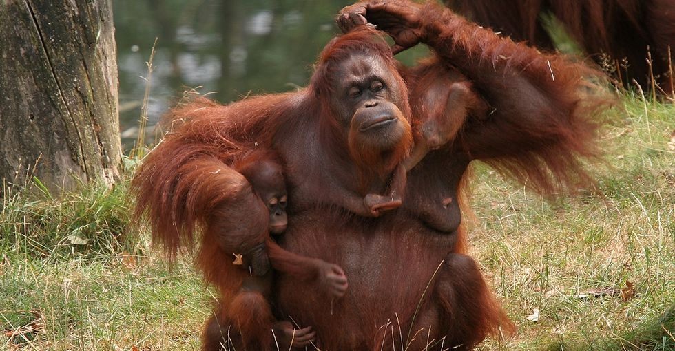A Hilarious Note About Orangutans That Might Just Hit Too Close To Home
