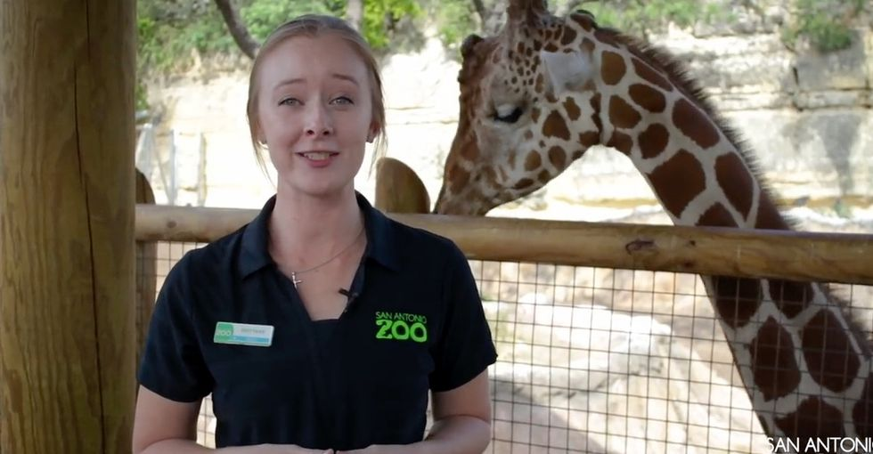 Why this zoo is trying to talk Toys R Us mascot 'Geoffrey the Giraffe' out of retirement.