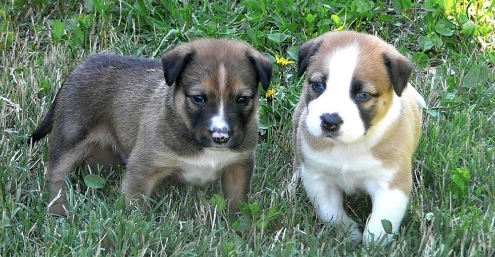 When choosing a new puppy, there's 1 factor more important than how cute he or she is.