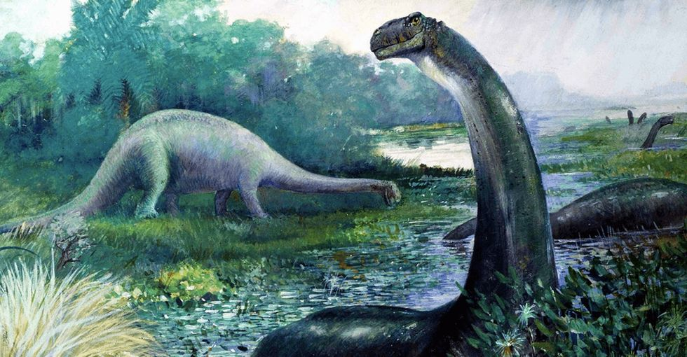 New evidence suggests the Brontosaurus could be real after all.