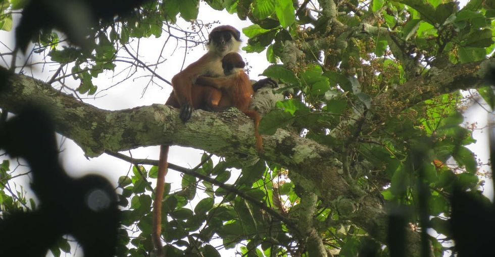This monkey has never been photographed before. Until now.