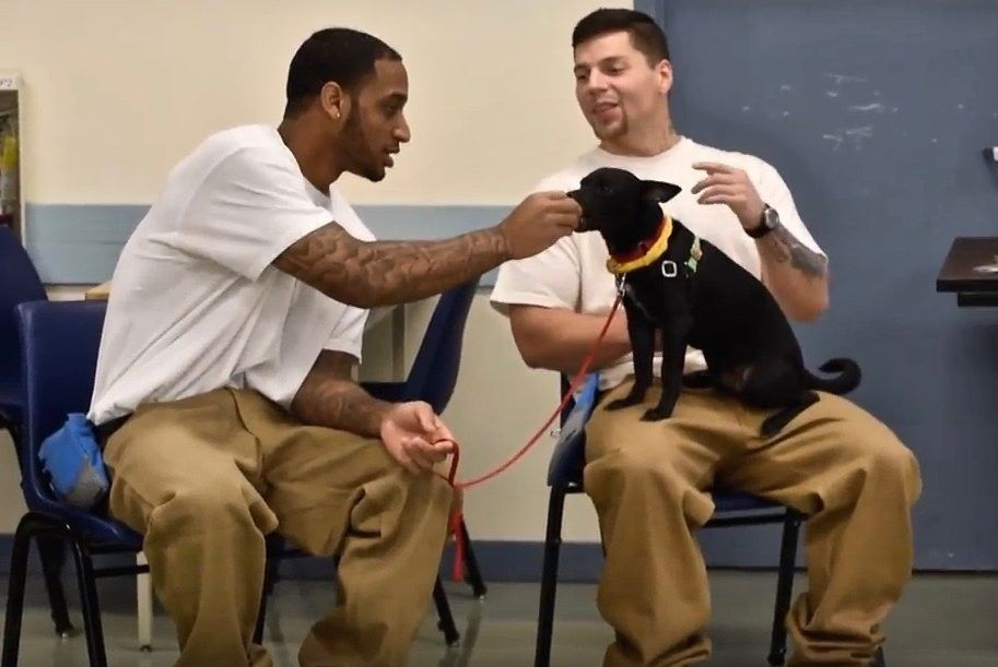 Prison inmates are training dogs for wounded warriors in record time