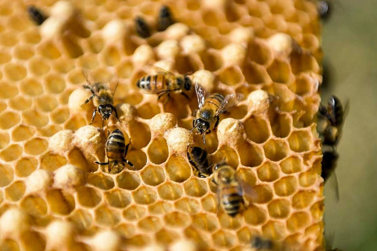Pornhub Is Saving the Bees