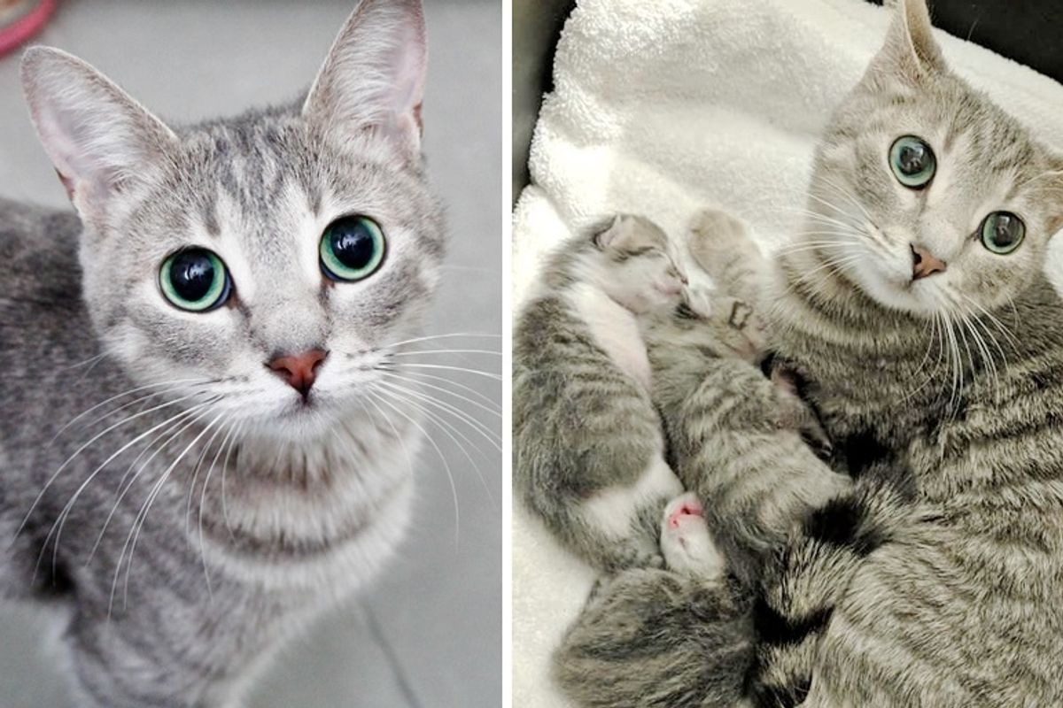 Stray Cat Gets Help from Woman She Befriended So Her Kittens Born Special Can Thrive