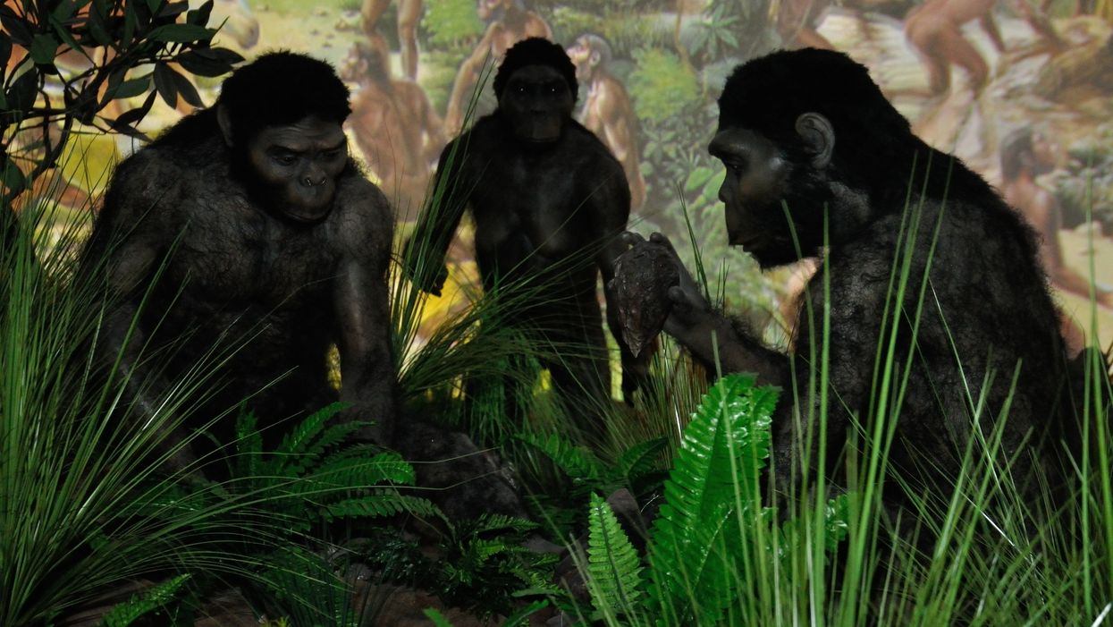 New fossils suggest human ancestors evolved in Europe, not Africa