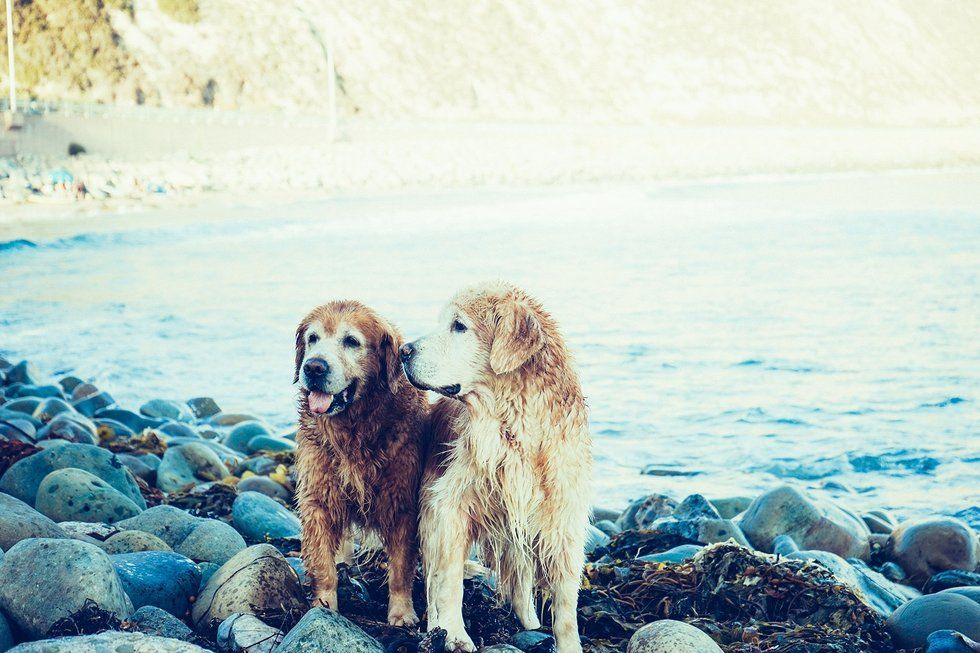 older doggos