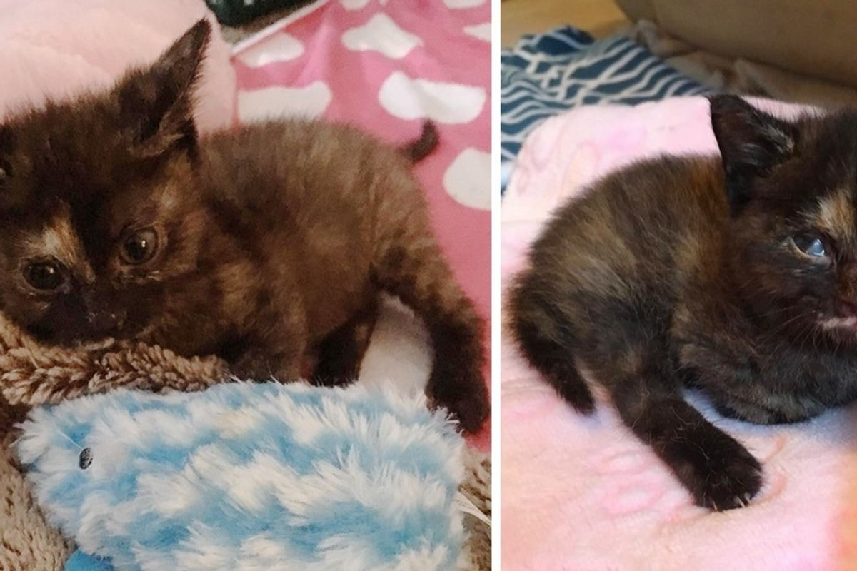 Wobbly Kitten Outlives Everyone's Expectations and Grows Up to Be the Happiest Cat