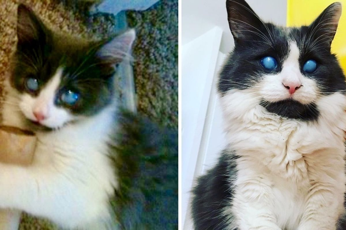 Blind Kitten Was Rejected by His Litter But Found Someone Who Showed Him Kindness and Changed His Life