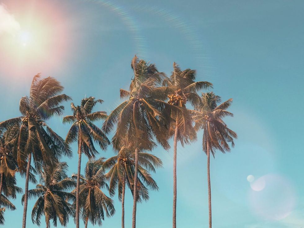 https://www.pexels.com/photo/coconut-dawn-daylight-exotic-1152359/