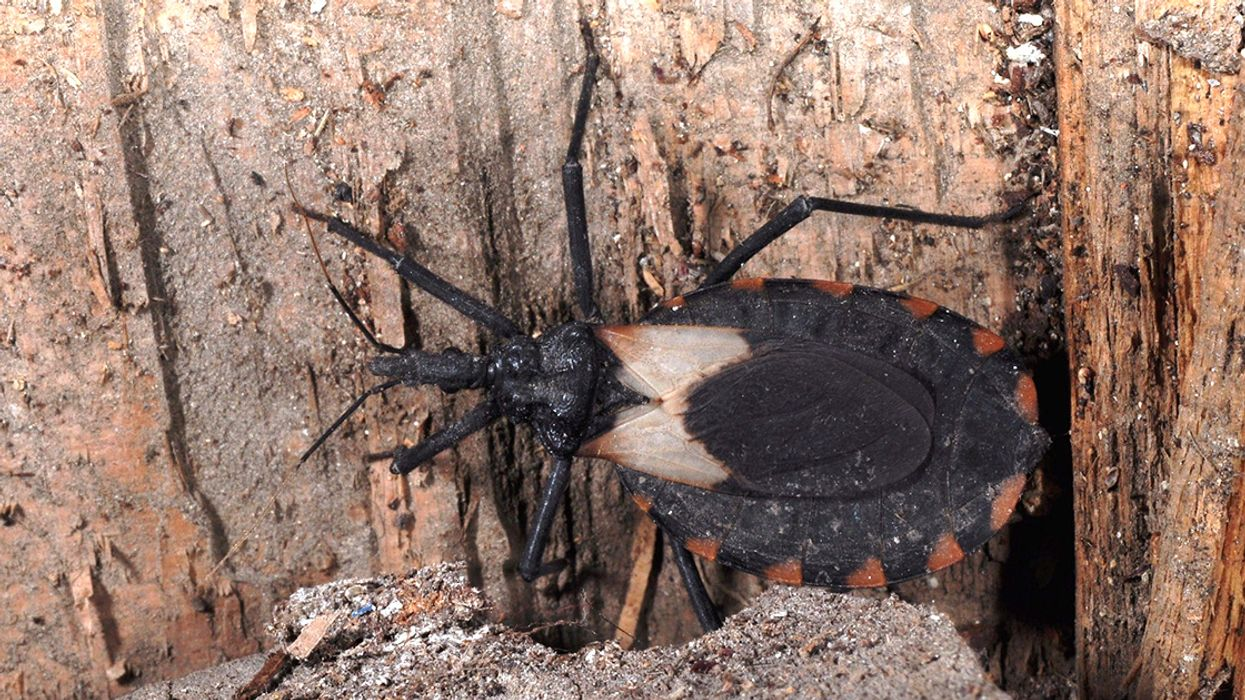 Deadly Kissing Bug Spreads to Delaware, CDC Confirms