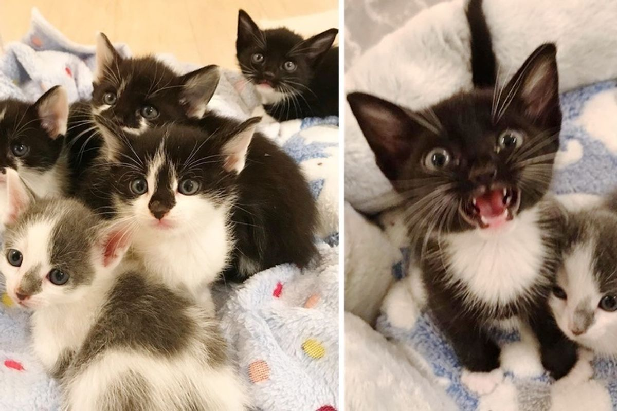 Stray Kittens Orphaned on the Street Stick Together Until Help Arrives