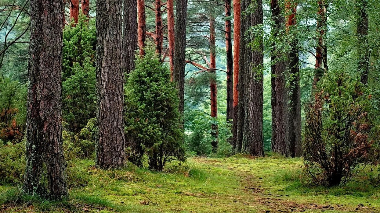 Arbor Day Foundation to Plant 100 Million Trees by 2022