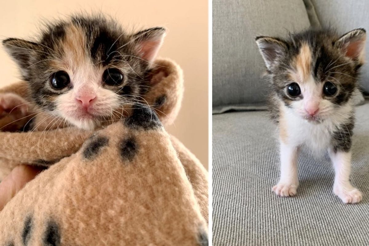 Homeowner Discovers Orphaned Kitten Under Their House After Seeing Stray Cats in Neighborhood