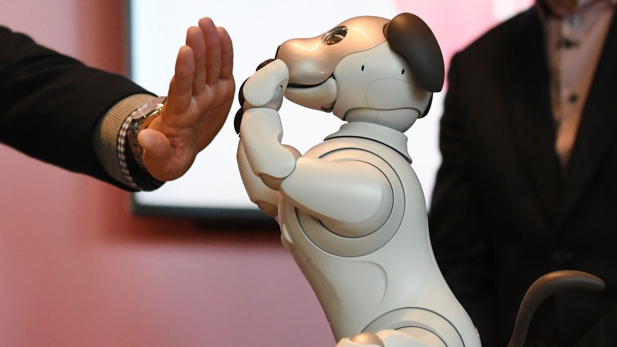 robots should have the same rights as animals