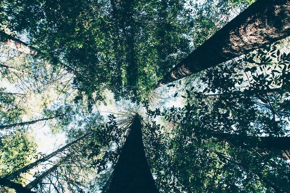 7 Small Ways To Make Big Environmental Changes